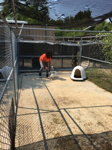 National Honor Society at work: Humane Society Adoption Center