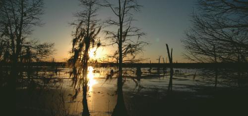 Bayous of Louisiana