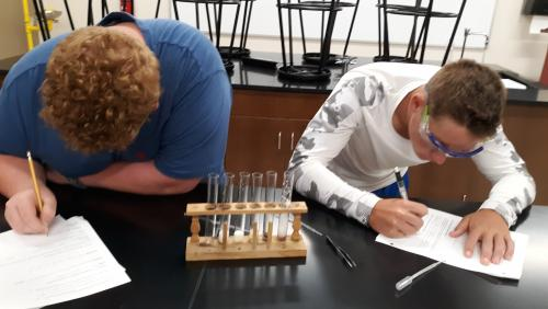 Biology classes investigating enzyme action.