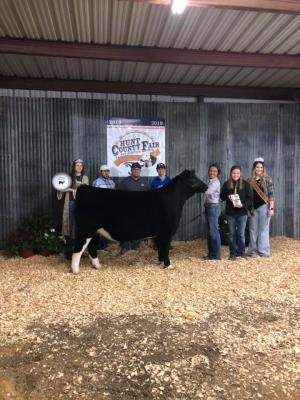 Kailee Murphy's Grand Champion Heifer 2019 Hunt County Fair