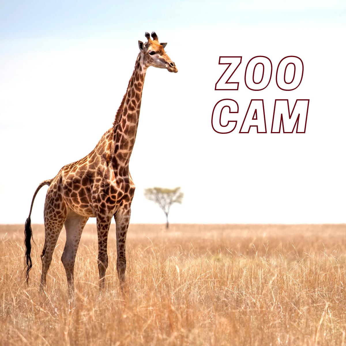 Zoo Cam