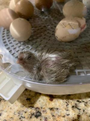 Hatching is such HARD WORK!