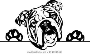 Bulldog photo