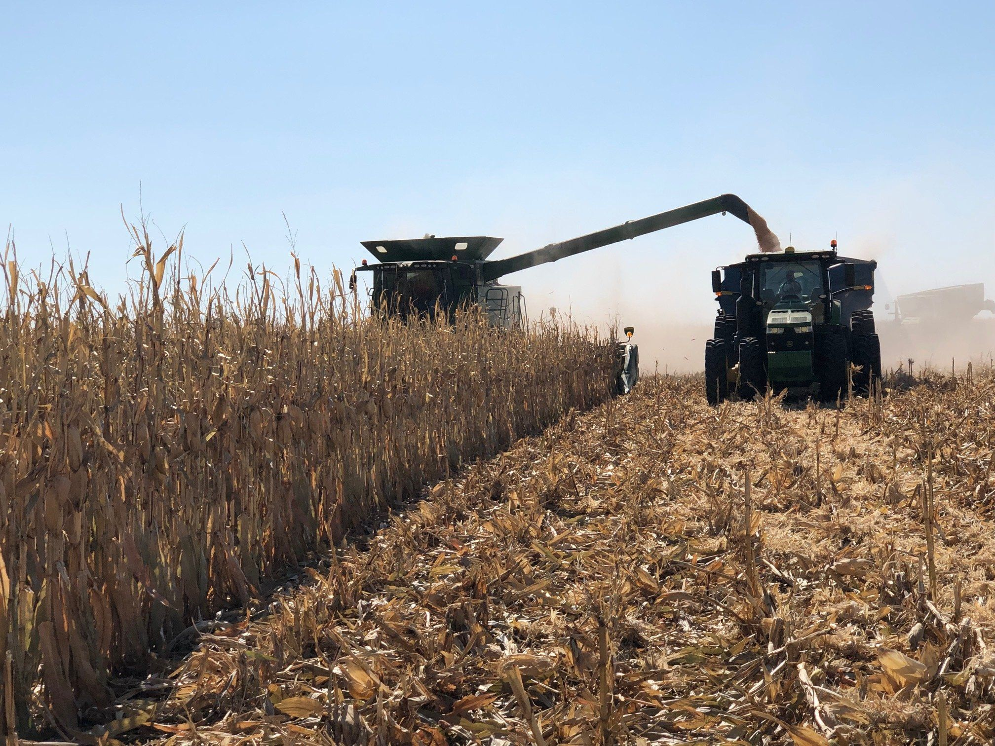 Combine dumps corn into grain cart.