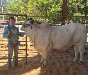 East Texas State Fair Heifer Show 9/2021
