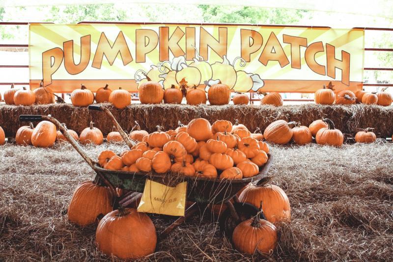 Pumpkin Patch Opens