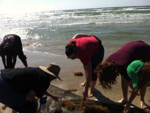 Mrs. Chatfield & Ms. Young exploring invertebrates on the Texas coast at CAST.