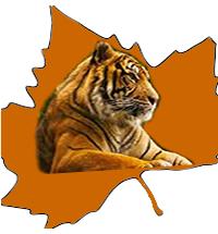 Tiger Leaf