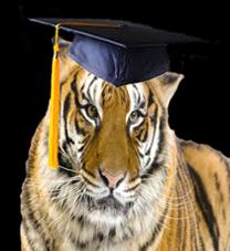 Grad Tiger