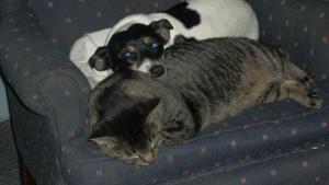 Pita and her cat