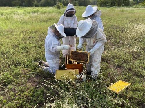 4G Beekeepers