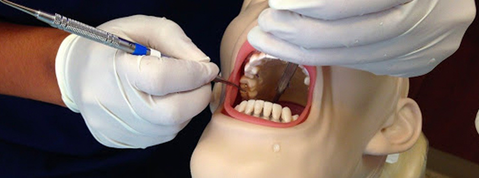 Dental student practicing oral hygiene skills