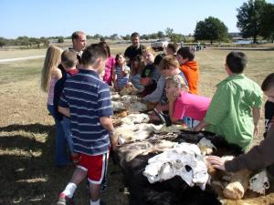 5th Grade students looking at skins of different animals that live in Oklahoma