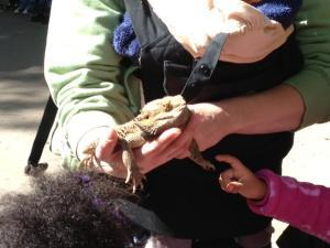 Children touch a bearded dragon during their field trip to El Rancho Exotica.
