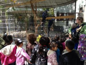 Kindergarteners learned that the Hyacinth Macaw is the largest bird in the parrot family.