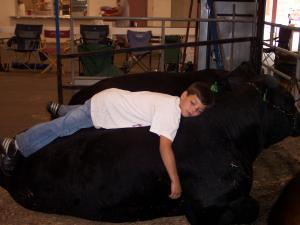 Bryce laying on one of his show bulls