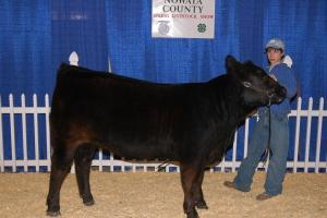 Aaron and his show heifer