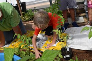 third graders planting tomatoes
