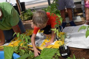 third graders planting tomatoes