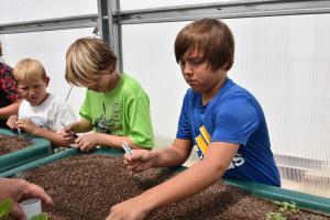 fifth grades plant marigolds