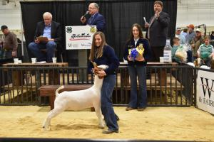 District Livestock Show