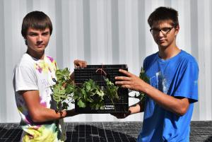 Showing off their strawberry box