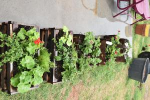 plant crates for sale
