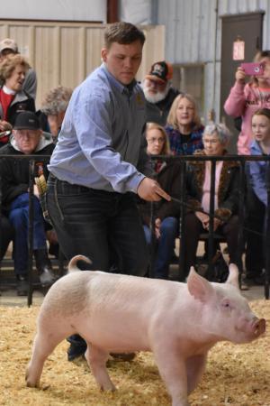 Local Livestock Show