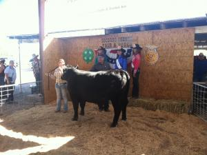 Tessa selling her steer