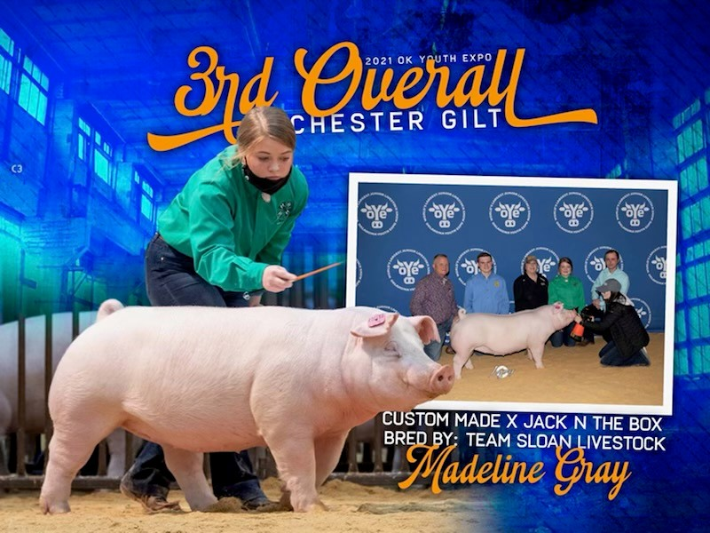 Madelyn Gray made the OYE Night of Stars Gilt Sale on Sunday March 28th with her Chester Gilt. She set the World Record High Selling Chester Gilt of all time! $20,000