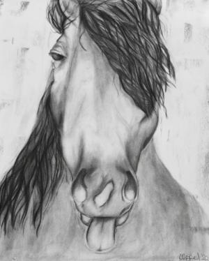 Horse in charcoal, by Ali A.