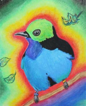 Oil pastel bird by Grace D.