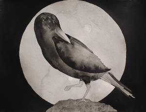 Raven in Ink, by Autum P.C.