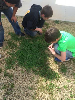 Searching for a four leaf clover on St. Patrick's Day