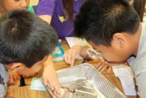Using the hand lens to observe the different parts of a worm.