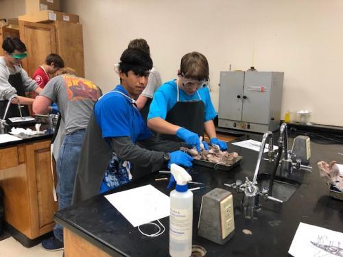 Honors Biology 2017-2018