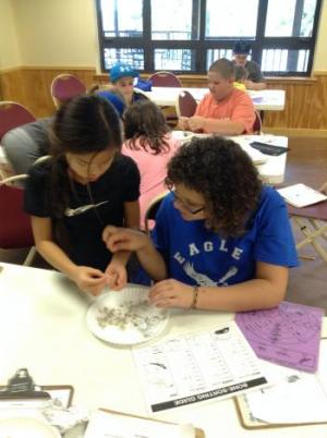 Investigating Owl Pellets