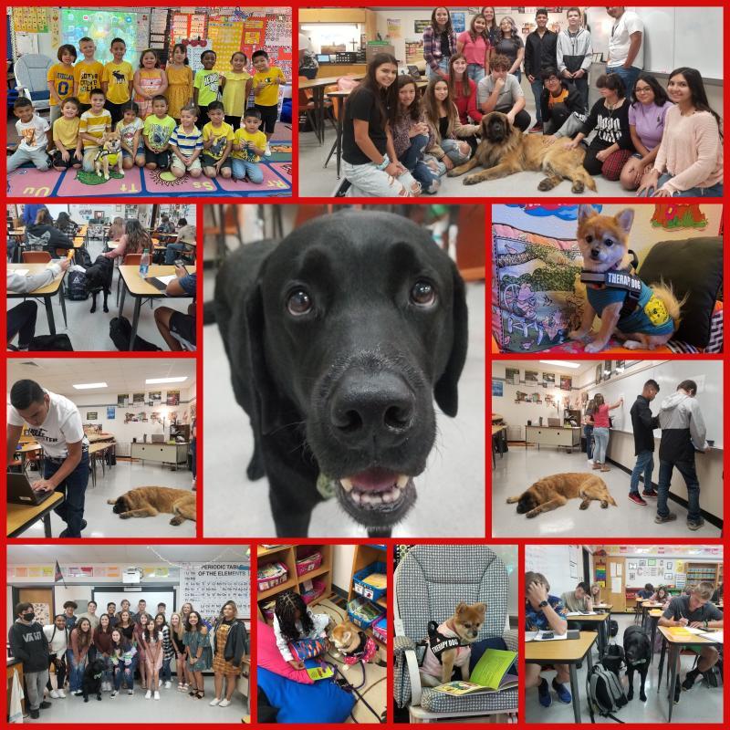 LISD Celebrates National Dog Day