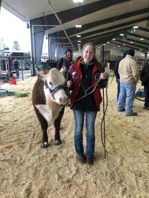 Samantha Ferrebee showing her heifer at the Henderson jackpot show