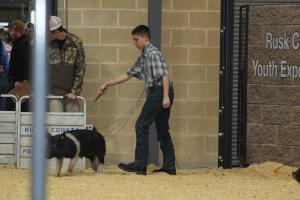 James Spencer showing his crossbred barrow at the Henderson jackpot show