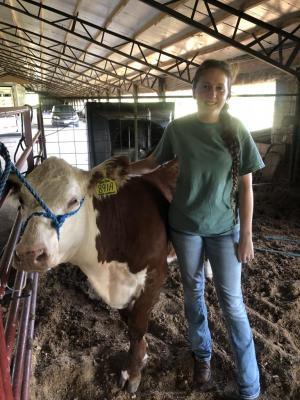 Samantha Ferrebee with her new polled hereford show heifer from Bryan Cattle Company in Garrison.