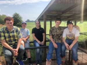 Shelbyville FFA Show Pig team picking out their pigs at SFA swine center
