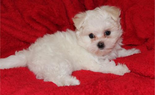 Our latest little baby Agatha