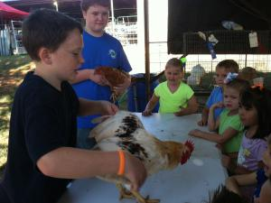 We learned about chickens and roosters.