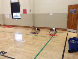 Push-up Testers