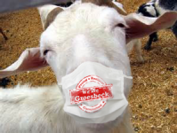 Goat with Mask