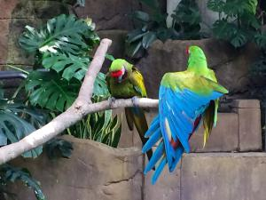 Parrots - Rainforest Pyramid - Moody Gardens