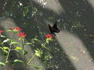 Butterfly - Tropical Rainforest Pyramid