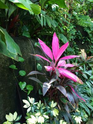 Flora in rainforest