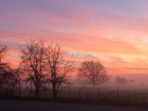 Spring Sunrise w/fog